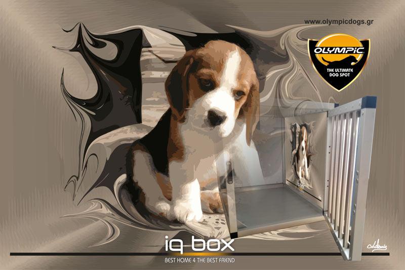 iqbox-index-003